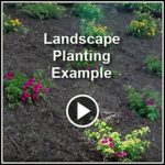 Ed's Landscaping Landscape Planting and mulch in La Crescenta, CA Example Videos